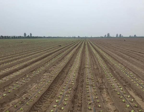 兴平市肯德基、海底捞蔬菜基地自动化项目
